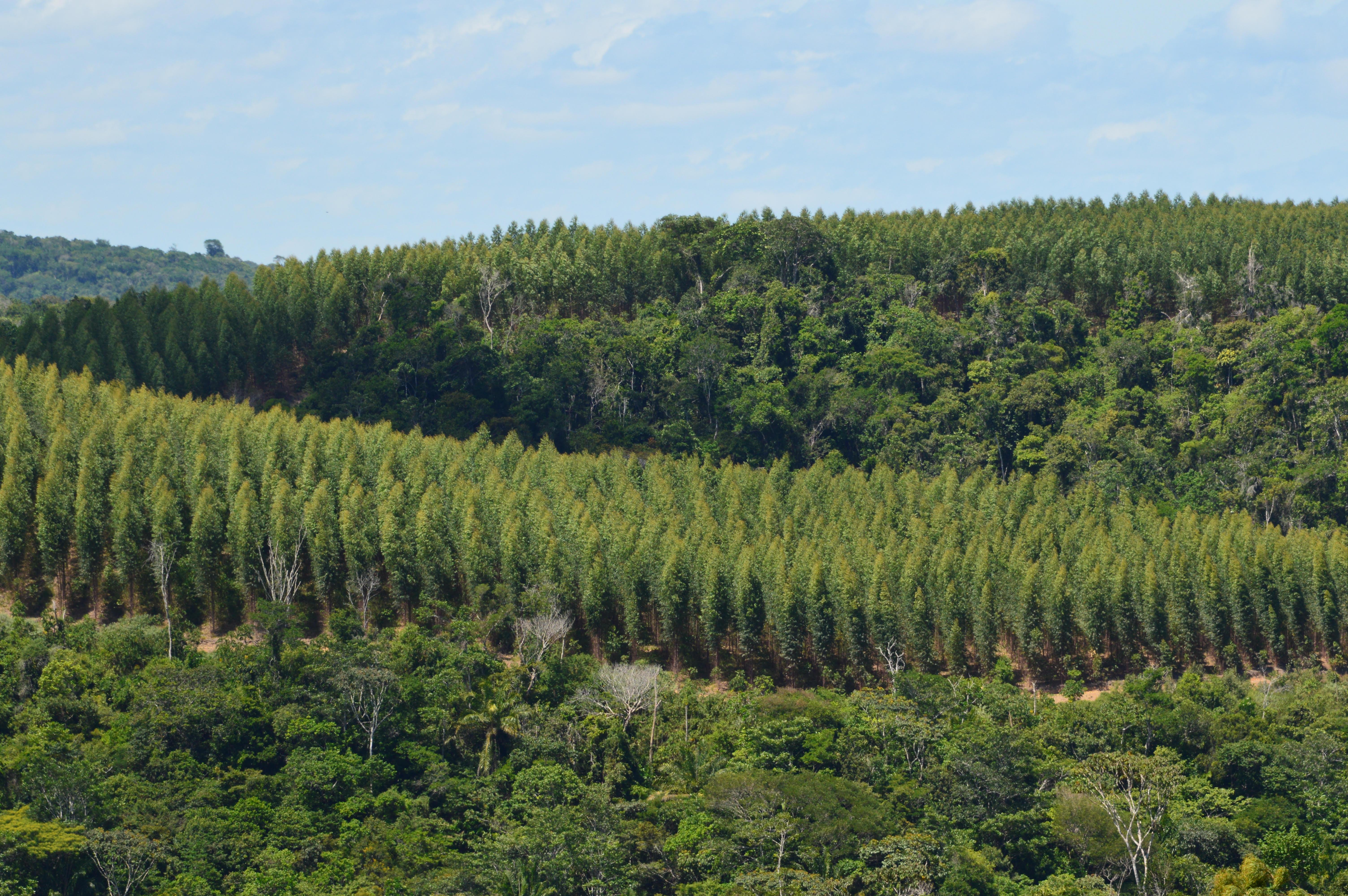 plantios mosaicos eucaliptos e nativas - Acervo Bracell.JPG